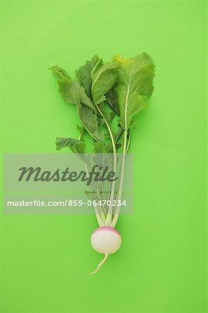 Turnip on green background