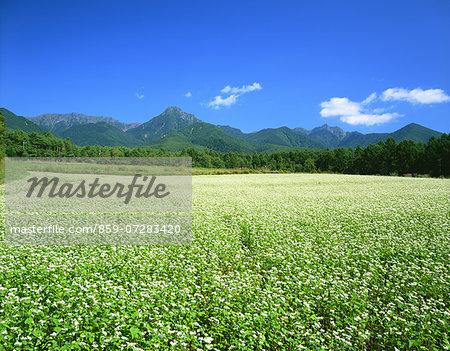 Mt. Yatsuga And Buckwheat Fields, Nagano, Japan