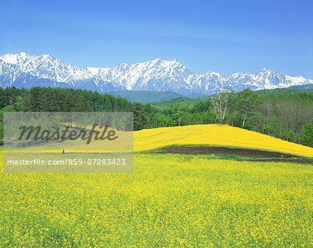 Nakayama Highland And North Alps, Nagano, Japan