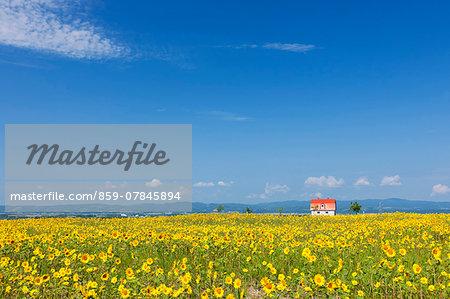 Flower garden and sky