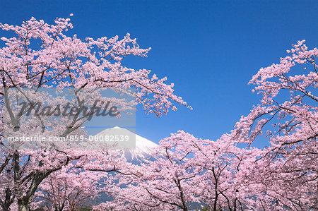 Shizuoka Prefecture, Japan