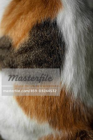 Cat back close-up