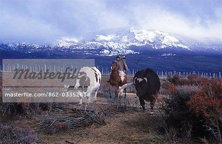 A huaso prepares to lasso a bull at Campo Bravo