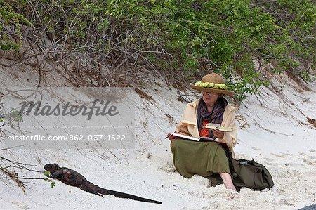 Galapagos Islands, An artist paints a marine iguana on the sandy beach of Espanola island.