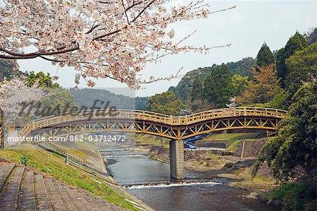 Spring cherry blossoms near river wooden arch bridge
