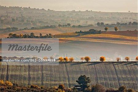 Italy, Umbria, Perugia district. Autumnal countryside near Montefalco