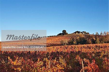 Italy, Umbria, Perugia district, Dawn over the autumnal vineyards near Montefalco