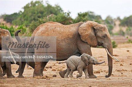 Elephants heading to a waterhole in Tsavo East National Park.