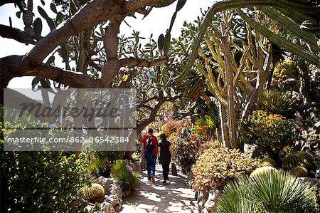 Exotic Garden in Principality of Monaco, Europe