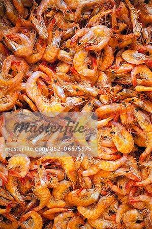 South America, Brazil, Para, Belem, prawns for sale in the Ver Oo Peso market on the docks in Belem in the Brazilian Amazon