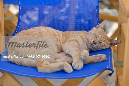 Cat asleep on a chair in Santorini, Kyclades, South Aegean, Greece, Europe
