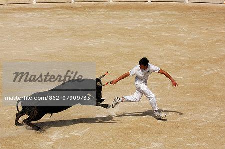Bull fighting in the Arena of Saintes Maries de la Mer, La Camargue, Provence, France