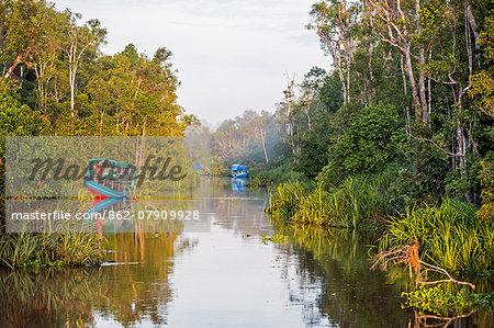 Indonesia, Central Kalimatan, Tanjung Puting National Park. Klotoks  comfortable, traditional river boats   moored along the Sekonyer River.