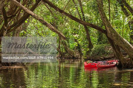 USA, Hawaii, Kauai, Kayaks on the forested banks Wailua River
