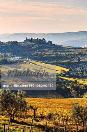 Italy, Italia. Tuscany, Toscana. Firenze district. Chianti. Panzano in Chianti