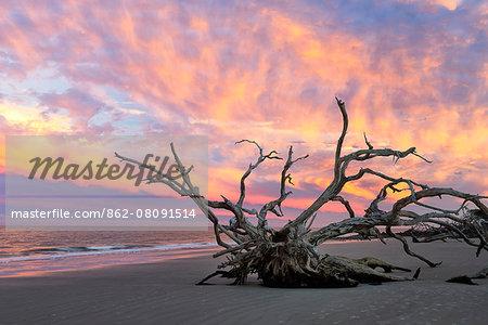 USA, Georgia ,Jekyll Island, Driftwood beach