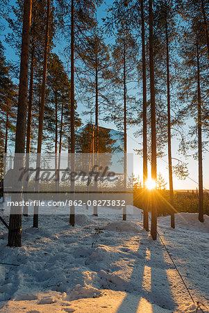 Arctic Circle, Lapland, Scandinavia, Sweden, The Tree Hotel, the Mirror Cube room