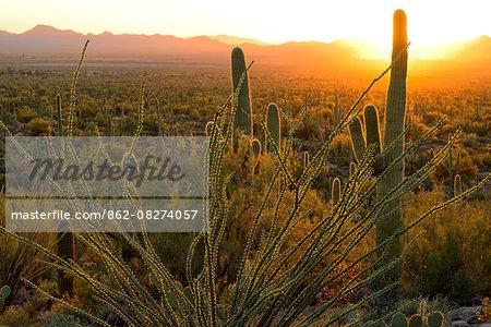 USA, Arizona, Tucson, Saguaro National Park, Sunset at signal mountain