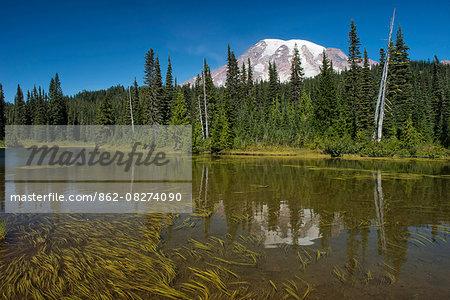 USA, Washington, Mount Rainier National Park, Reflection of Mt. Rainier