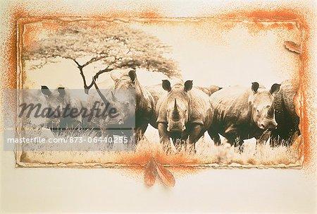 Herd of Rhinoceros