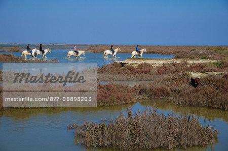 France, Southern France, Gard, Camargue, Saintes Maries de la Mer, horseback riding