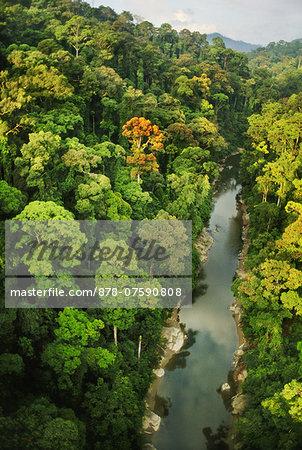 Lowland rainforest, aerial view, Danum Valley, Sabah, Borneo