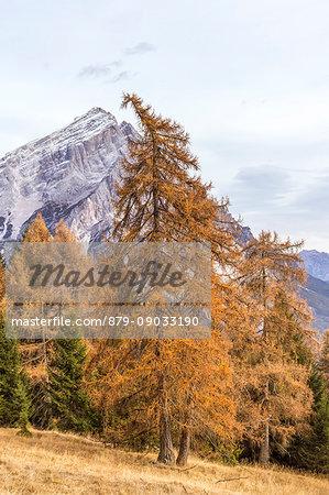 Mount Antelao in autumn,San Vito di Cadore,Boite Valley,Belluno district,Veneto,Italy,Europe