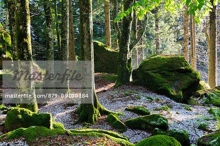 The sun filters in the forest trees. Bagni di Masino, Valmasino, Lombardy, Italy.