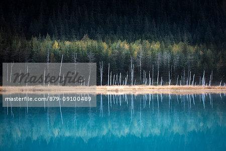 Kenai peninsula, Alaska, United States of America, usa, North America