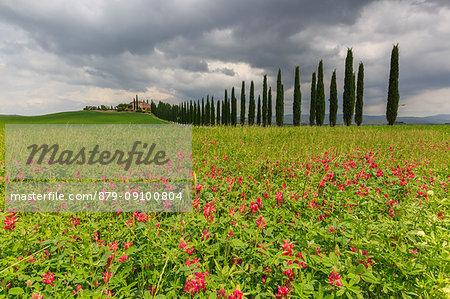 Italy, Tuscany, Orcia valley, flowers at farmhouse Poggio Covili at Castiglione d'orcia, provence of Siena