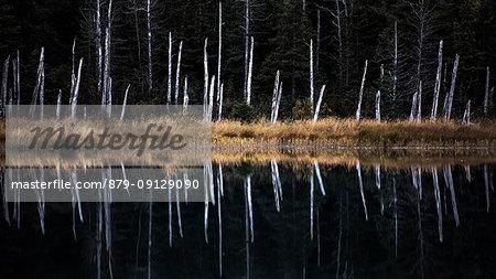 Kenai Peninsula, Alaska, United states, North america