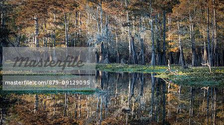 Bayou in Atchafalaya river, Plaquemine,Atchafalaya Basin, Louisiana, Southern United States, USA, North America