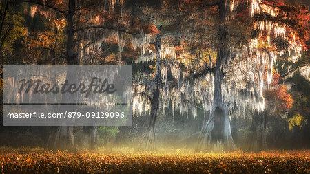 Atchafalaya river, Plaquemine,Atchafalaya Basin, Louisiana, Southern United States, USA, North America