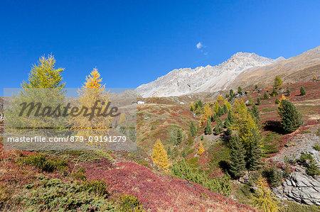 Val Vezzola during autumn, Valdidentro, Valtellina, Sondrio province, Lombardy, Italy