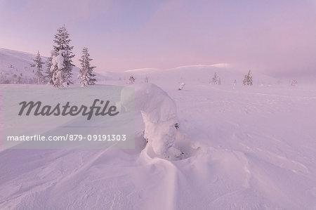 Frozen dwarf shrub, Pallas-Yllastunturi National Park, Muonio, Lapland, Finland