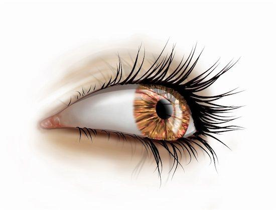 Stylized illustration of a female eye with long luscious eyelashes Stock Photo - Royalty-Free, Artist: paulfleet, Image code: 400-04624727