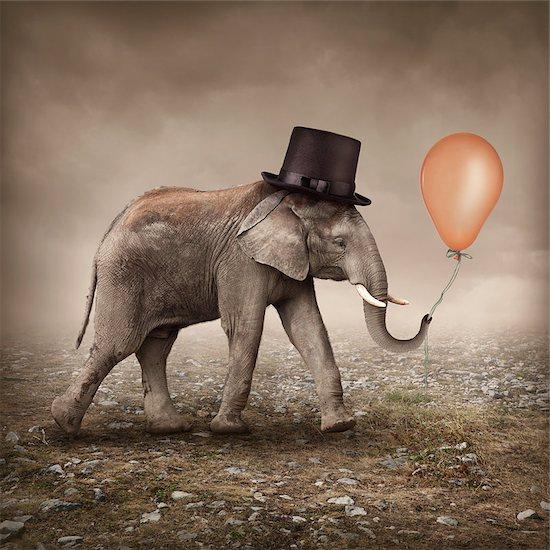 Elephant with an orange balloon Stock Photo - Royalty-Free, Artist: egal, Image code: 400-08034567