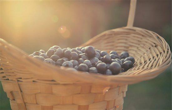 Blueberry basket Stock Photo - Royalty-Free, Artist: orla, Image code: 400-08034805