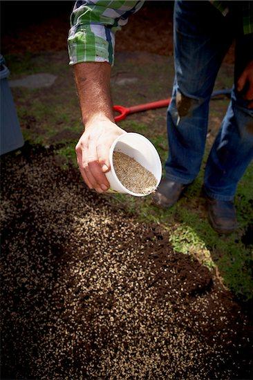 Gardener spreading Grass Seed, Toronto, Ontario, Canada Stock Photo - Premium Royalty-Free, Artist: Shannon Ross, Image code: 600-05800604