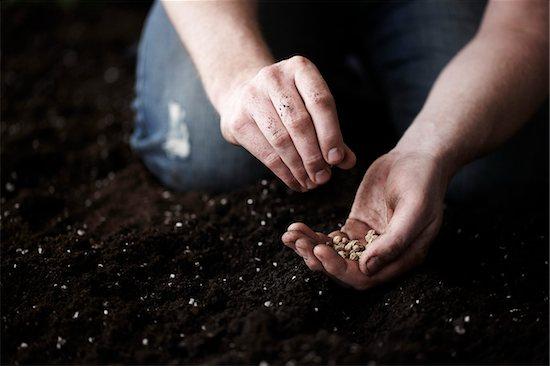 Man Planting Nasturtium Seeds in Garden Stock Photo - Premium Royalty-Free, Artist: Yvonne Duivenvoorden, Image code: 600-05973624