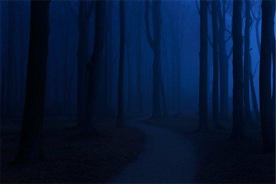 Coastal Beech Forest with Path and Fog in Night, Gespensterwald, Nienhagen, Bad Doberan, Western Pomerania, Germany Stock Photo - Premium Royalty-Free, Artist: Raimund Linke, Image code: 600-07802918