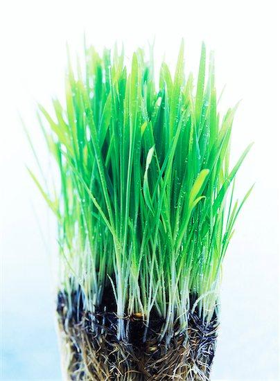 New Growth Stock Photo - Premium Royalty-Free, Artist: David Muir, Image code: 600-00160060
