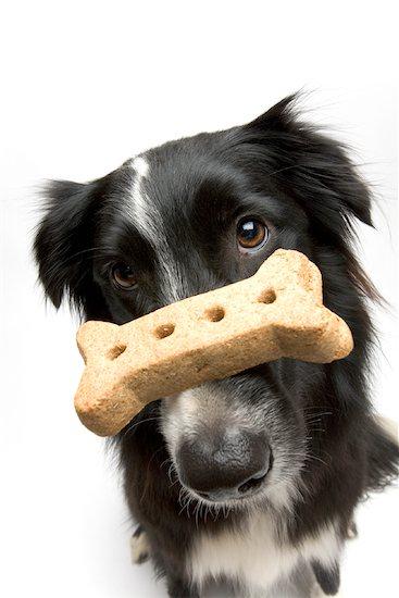 Portrait of Dog With Treat Balanced on Nose Stock Photo - Premium Royalty-Free, Artist: Michael Eudenbach, Image code: 600-02121169