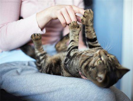 Anatomy Of A Kitten Stock Photos Page 1 Masterfile
