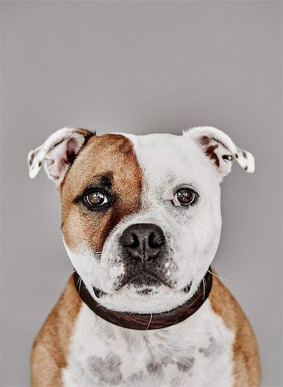 Portrait of dog Stock Photo - Premium Royalty-Free, Image code: 6102-08384406