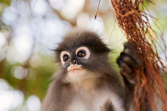 Monkey Stock Photo - Premium Royalty-Free, Image code: 6102-08858594