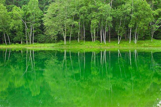 Birch trees reflected on Tateshinakogen lake in Nagano Stock Photo - Premium Royalty-Free, Image code: 622-06369883
