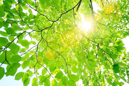 Sun filtering through green leaves Stock Photo - Premium Royalty-Free, Image code: 622-07108854