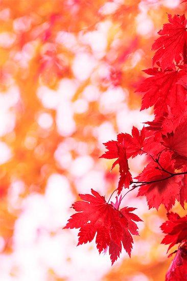 Autumn leaves Stock Photo - Premium Royalty-Free, Image code: 622-07841366
