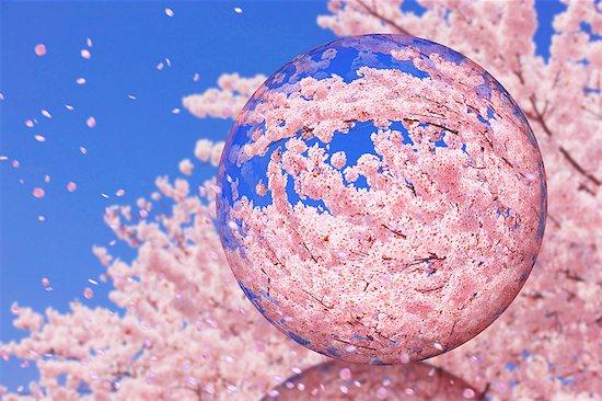 Glass globe and cherry blossoms Stock Photo - Premium Royalty-Free, Image code: 622-07841575